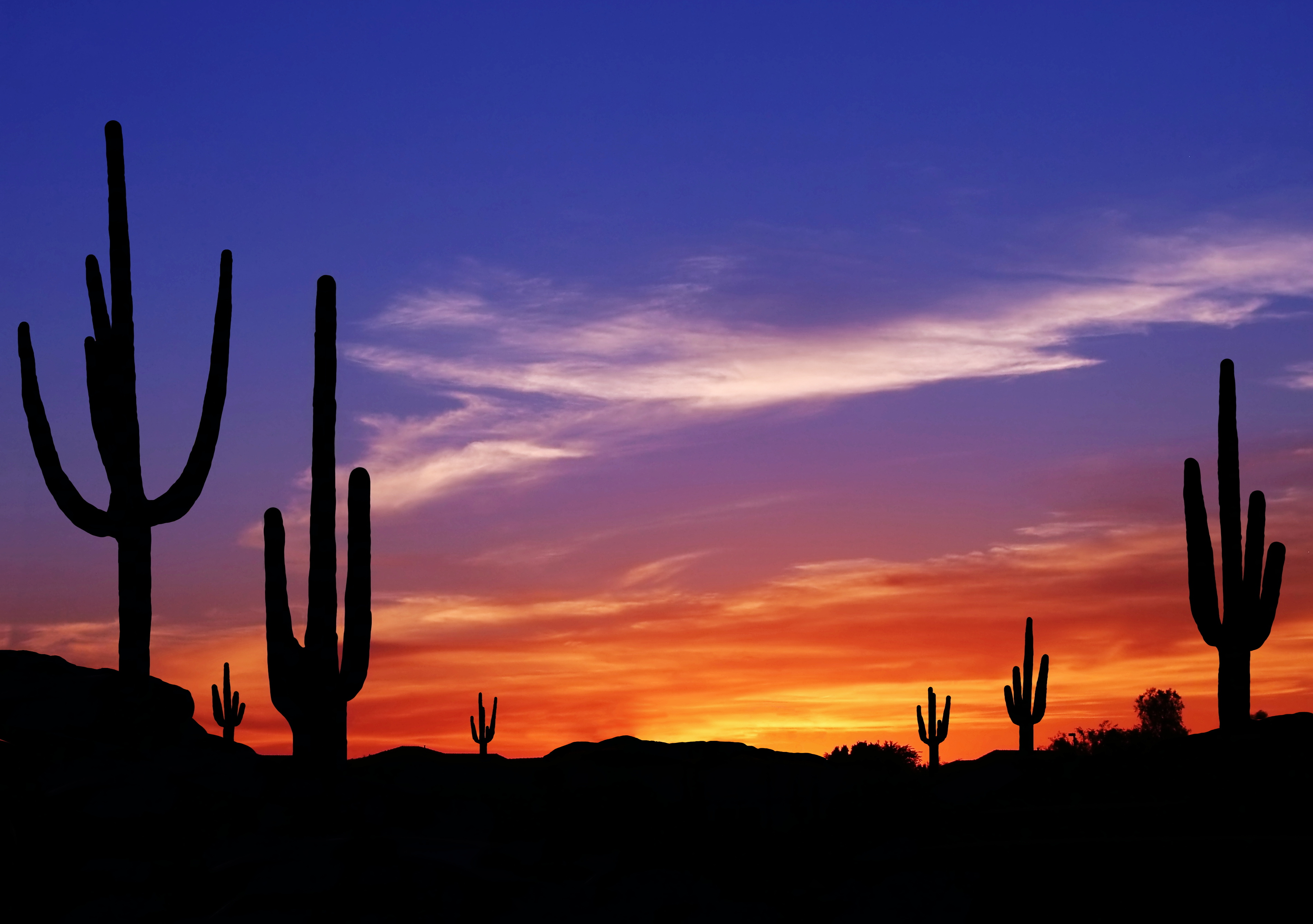 Colorful Sunset in Wild West Desert of Arizona with Cactus ...